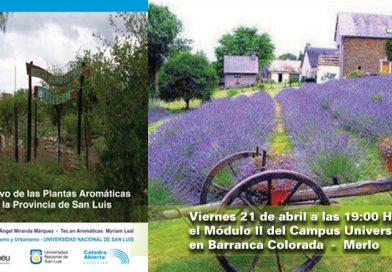 Plantas Aromáticas en la Provincia de San Luis
